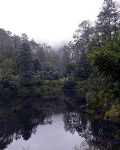 ¿Sabías que desde el 27 de noviembre de 1936 las Lagunas de Zempoala están protegidas por decreto oficial para la conservación de la flora y fauna regional? Este decreto se modificó 11 años más tarde, reduciendo su extensión a 4 mil 790 hectáreas, de las cuales, 3 mil 965 forman parte del estado de México …