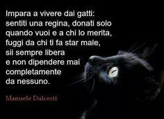 """Per chi sottovaluta l'importanza e la bellezza di un gatto, prima bisogna conoscerli per capire e poi """"impara a vivere dai gatti"""" : sentiti una regina, donati dolo quando vuoi e a chi lo merita, fuggi da chi ti fa star male, sii sempre libera non dipendere mai completamente da nessuno.  Promemoria di Manuele Dalcesti ;) Kind Words, True Words, Words Quotes, Me Quotes, Love You, My Love, Grumpy Cat, Talk To Me, Proverbs"""