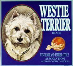 Marshall Canyon Yorkshire Terrier Dog Yorkie Orange Fruit Crate Label Art Print
