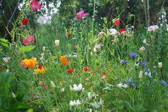 my own little garden in august 2013