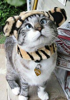 Crazy cross eyed cat