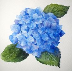 Step-by-Step Watercolor: How to Paint a Blue Hydrangea