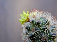 O cactos floresce, o sol aparece, o sorriso de satisfação cresce