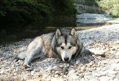 Geronimo+Shish+Inday+des+Loups+du+Valgo.gif (663×453)