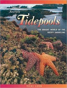The Secrets of Tidepools: The Bright World of the Rocky Shoreline (Jean-Michel Cousteau Presents) Great product! Ocean Unit, Tide Pools, Animal Books, Jean Michel, Reading Levels, Book Show, Water Systems, Life Cycles, Marine Life
