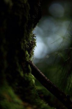 Gaia's Grove | Mossy Tree