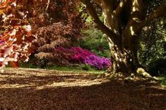 Sheffield Park and Garden - Bing images