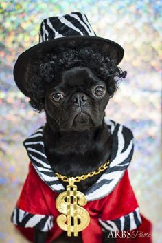 """Explore our site for additional info on """"black pug puppies"""". It is an exceptional location to learn more. Black Pug Puppies, Dogs And Puppies, Doggies, Puppy Dog Eyes, Purebred Dogs, Losing A Dog, Dog Training Tips, Image Hd, Dog Pictures"""