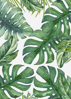 Monstera Leaves Mini Art Print by Nadja - Without Stand - x Cute Wallpapers, Wallpaper Backgrounds, Plant Wallpaper, Leaves Wallpaper, Leaf Art, Tropical Leaves, Blue Butterfly, Monstera Leaves, Printable Wall Art