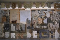 Museum Case, detail of installation by Alison Bigg. Cast soap and artifacts