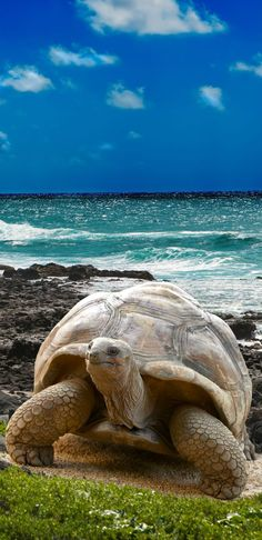 Made up of 19 volcanic islands, there is so much to see in the Galapagos Archipelago both on land and underwater, as a lot of the wildlife is endemic only to this area; from the marine iguanas and giant tortoises, all the way to the blue-footed Boobys and penguins.
