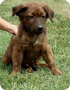 I wish we could adopt this guy!! Australian shepard mix!! He's so handsome!!!
