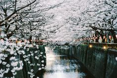 Hanami à Naka-meguro, Japon. Places To Travel, Places To See, Beautiful World, Beautiful Places, Beautiful Scenery, Cherry Blossom Japan, Cherry Blossoms, Japon Tokyo, Belle Villa