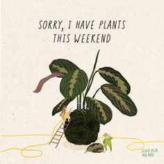 Plakát Sorry I Have Plants - Zahrada na niti Water Plants, Garden Plants, House Plants, Cactus Plants, Plant Painting, Plant Art, Plant Drawing, Hanging Plants, Indoor Plants