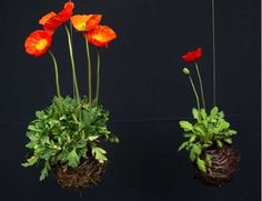Kokedama Garden Design Ideas, Easy Eco Friendly Home Decorations