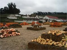 Best Pumpkin Patches and Farms in the San Francisco Bay Area