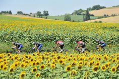 Tour de France 2016 - 08/07/2016 - Etape 7 - L'Isle-Jourdain/ Lac de Payolle (162,5 km) - ETIXX-QUICK STEP emmène le peloton et réduit l'écart avec l'échappée © ASO/A.Broadway