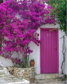 Radiant Orchid - Complimentary Color