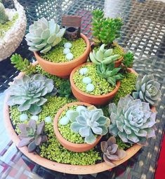 43 Awesome Mini Succulent Ideas in Pots - Deko mit Suculentas - Different Types Of Succulents, Types Of Succulents Plants, Cacti And Succulents, Planting Succulents, Succulent Landscaping, Succulent Gardening, Succulent Terrarium, Succulent Ideas, Organic Gardening