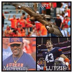 RIP Mr. Penny ---- Tiger----- LUTZIE