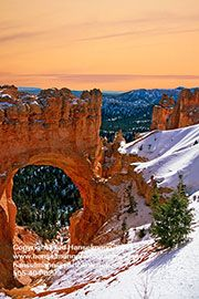 10281, Snowy Arch and Pines, Sunset, Arches National Park, Utah