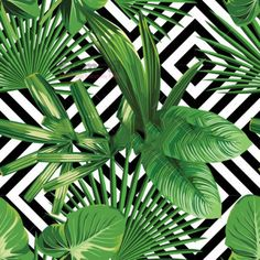 Illustration about Print summer exotic jungle plant tropical palm leaves. Pattern, seamless floral vector on the black white geometric background. Illustration of nature, hawaiian, brazil - 73556925 Tropical Wallpaper, Nature Wallpaper, Palm Wallpaper, Harlequin Wallpaper, Diamond Wallpaper, Pattern Wallpaper, Leaves Wallpaper, Green Wallpaper, Seamless Background
