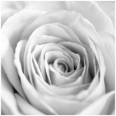 White II by ~GreenEyedHarpy on deviantART