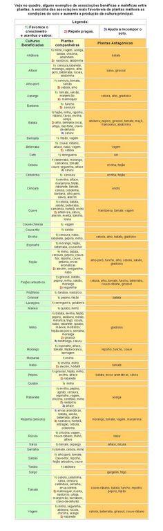 A CIDADE DAS HORTAS: Alelopatia: Plantas Companheiras e Plantas Antagónicas