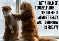 """... """"The coffee is almost ready 'Bob-Freddy' so take it steady, and tomorrow it's Friday!  Remember, we are going away to Monterrey!  Hip, Hip, Hooray!""""  (Additional Caption Written By: Lynn Chateau © )"""