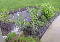raingarden (the future is the water!)