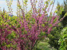 Primavera in Gallura Plants, Spring, Green, Plant, Planets
