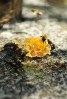 """¿Cuál es la especie animal """"más valiosa del mundo""""? Algunos dicen que la abeja. Descubra por qué en nuestro blog: www.somostriodos.com/cual-es-la-especie-animal-mas-valiosa-del-mundo/"""