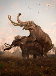 Velizar Simeonovski - North American mammoth species likely interbred with one another