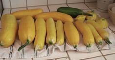 Summer Squash Recipes, Yellow Squash Recipes
