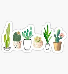 """""""Potted Succulents"""" Stickers by BekkaCampbell Stickers Cool, Cactus Stickers, Red Bubble Stickers, Tumblr Stickers, Phone Stickers, Printable Stickers, Planner Stickers, Aesthetic Stickers, Doodles"""