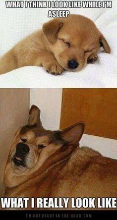 what I think I look like when I'm sleeping...