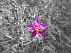 florecilla silvestre Plants, Wild Flowers, Planters, Plant, Planting