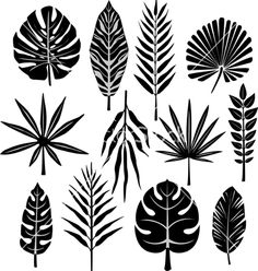Tropical leaf vector 638919 - by Wikki33 on VectorStock®