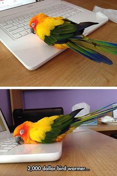20 Cool and Geeky Pictures That Will Brighten Your Day - TechEBlog--a bird warmer.