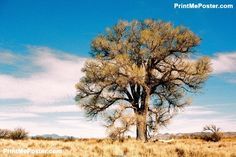 Poster of Lone Tree- Color, Nature Posters, #poster, #printmeposter, #mousepad, #tshirt