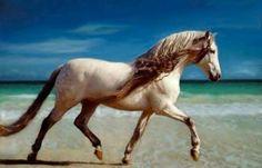 """Articles de noemie79 taggés """"plage"""" - Les chevaux - Skyrock.com"""