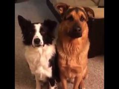 2 very cute dogs,friends forever...very cute pets and animals