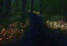 Light a garden path with fiber optic fairy lights!!  Longwood gardens, Forest of Light.