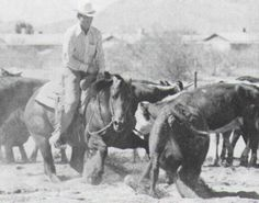 Doc O'Lena - He is one of only two horses in the American Quarter Horse Hall of Fame with both parents who are also inductees. Doc O'Lena was National Cutting Horse Association Futurity Champion. In all, Doc O'Lena earned $21,991.93 in NCHA earnings, along with an NCHA Certificate of Ability. His son Smart Little Lena was the first winner of the NCHA Triple Crown and in 1978 Doc O'Lena himself was syndicated for $2.1 million, at that time a record for the cutting horse industry.