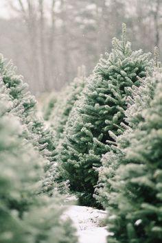 651875c756f Photo. Christmas Tree FarmsChristmas ...