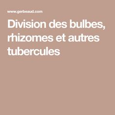 Division des bulbes, rhizomes et autres tubercules Cyclamen, Horticulture, Division, Bulbs, Lily Of The Valley, Lawn And Garden, Garden Planning