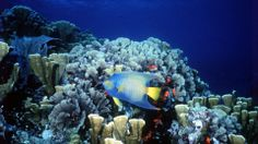 fish-Vacation-in-Cozumel-the-Exotic-Island-in-the-Caribbean-Sea-in-Mexico