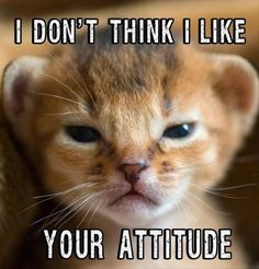 I don't think I like your attitude!