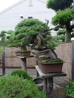 Gardening, Bonsai, Garden, Yard Landscaping, Urban Homesteading, String  Garden, Horticulture