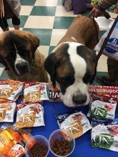 Danielle from Farmina Pet Foods USA was at Marathon Town & Country Store's open house last weekend. She was sharing samples of Natural & Delicious dog & cat food & met these two cuties - don't they look excited to try it!